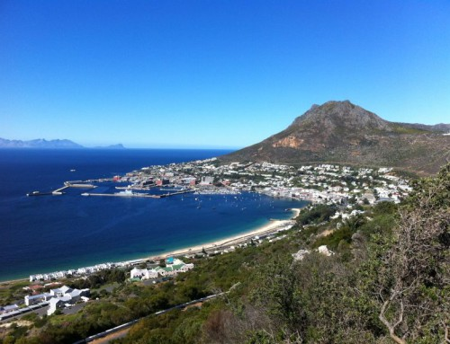 10 Things to Do in Simon's Town