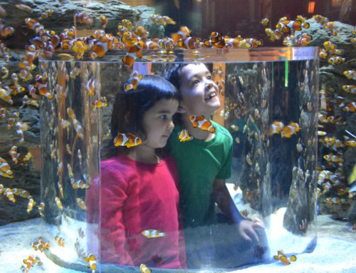 Two Oceans Aquarium – The Coolest Place in Town