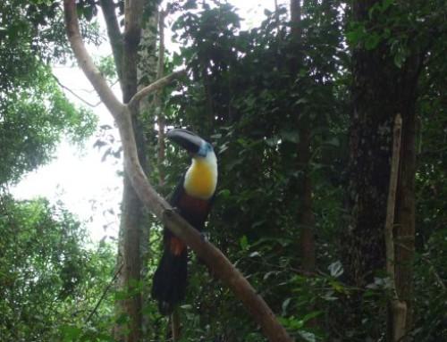 Garden Route Attractions: Birds of Eden